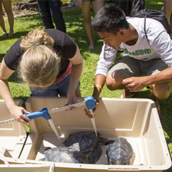 Science Campers work at the Sea Turtle Project
