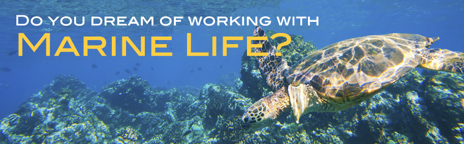 Do you dream of working with Marine Life